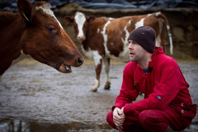Rhod looking at a cow