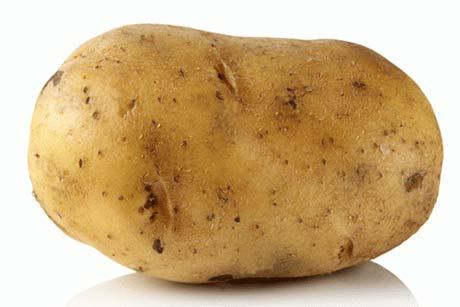 picture of a potato
